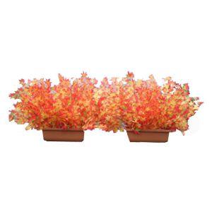 【秋装飾】紅葉プランター(Sサイズ)イメージ