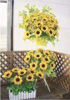 【フラワー装飾】ウインドウプランター 菜の花(入れ替え用)イメージ3